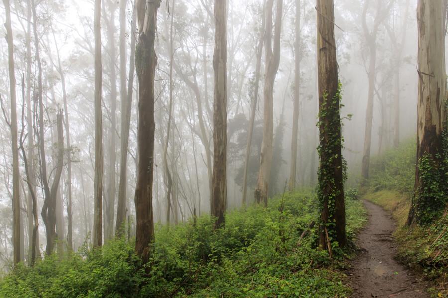 Forest Cloud. Mount Sutro
