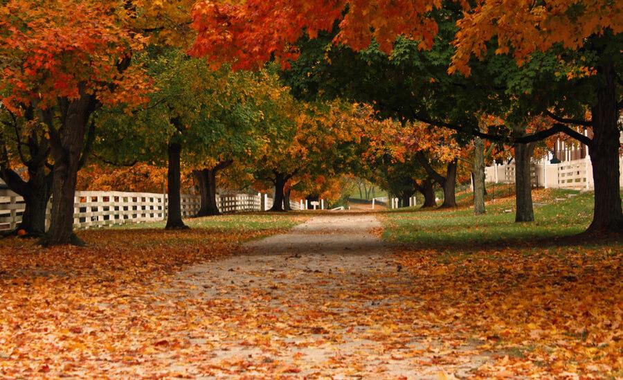 Kentucky Fall Trees