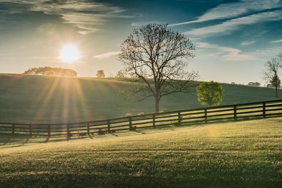 Kentucky Field at Dawn