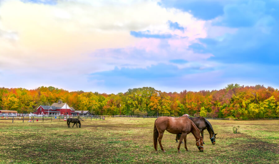Maryland farm in Autumn