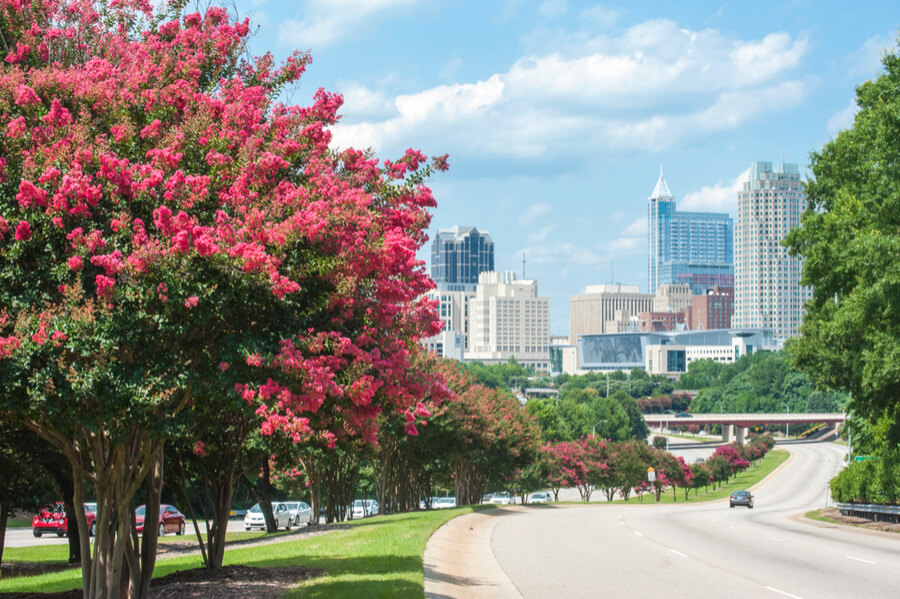 Raleigh skyline in the summer