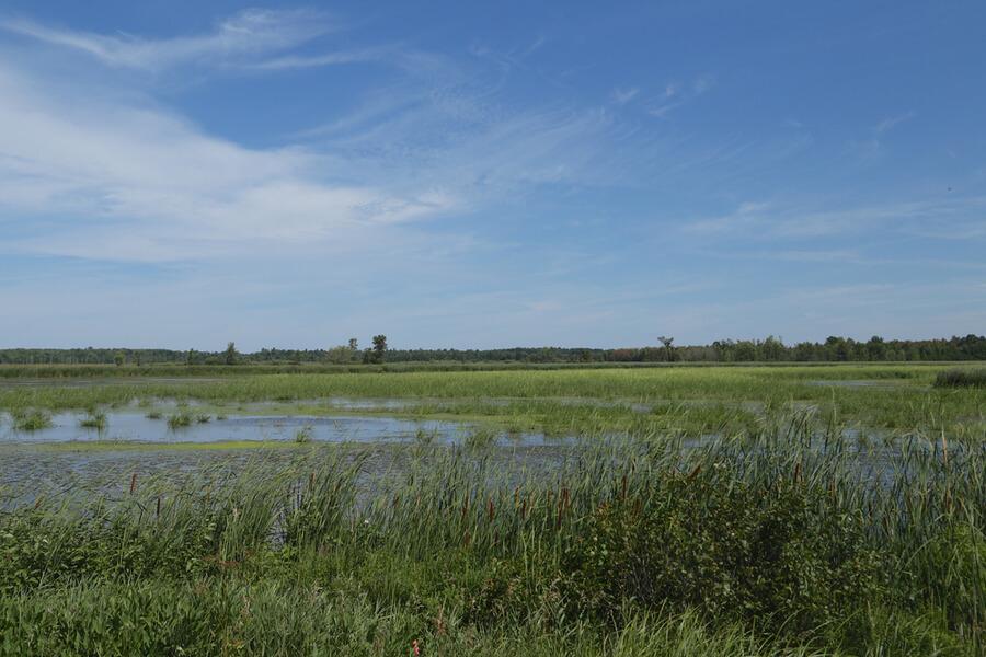 Wildlife Management Area near Watertown, New York